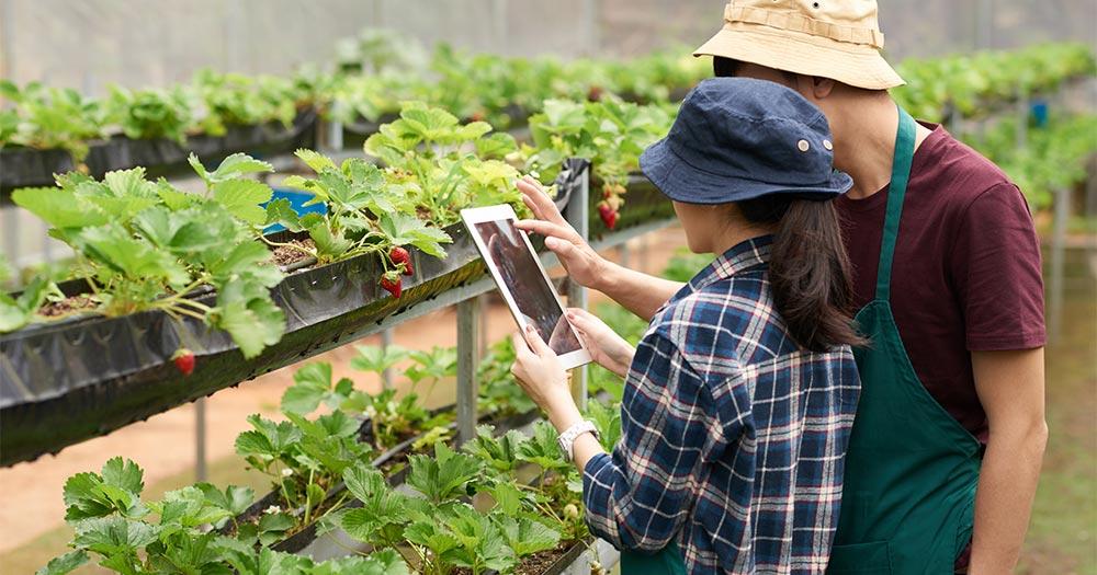 Phát triển nông nghiệp 4.0 đòi hỏi phải còn nguồn lao động chất lượng cao